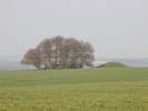 [Tumuli on Avebury Down]