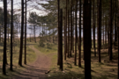 newborough-forest.png